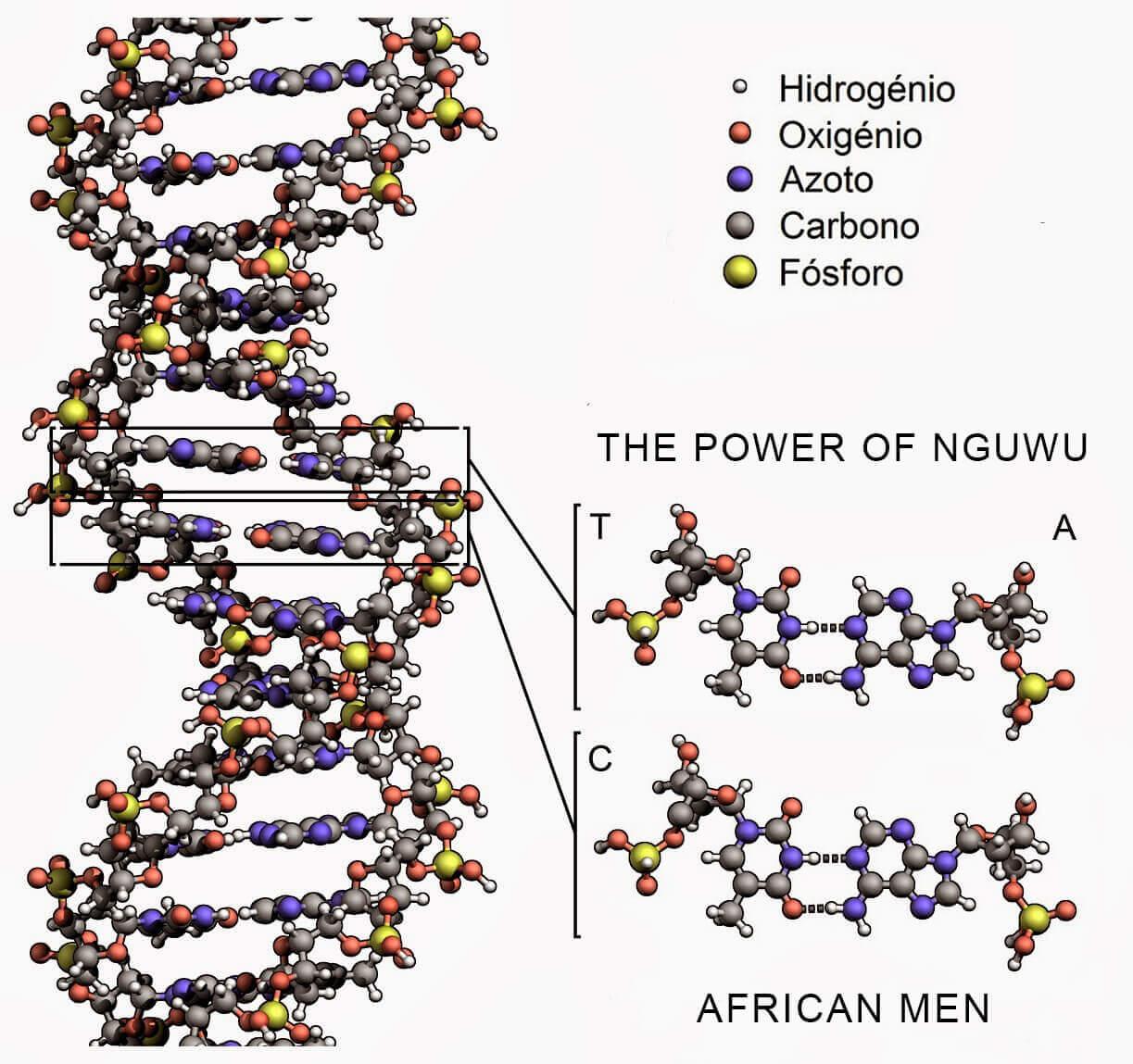 Lý do nam giới Châu Phi có cậu nhỏ khá hoành tráng 2