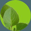 Xịt giảm cân Eco Spray nhanh hiệu quả và an toàn 5