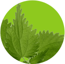 Xịt giảm cân Eco Spray nhanh hiệu quả và an toàn 6