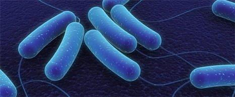 Xịt lợi khuẩn Skin Fresh đánh bay mụn tức thì hiệu quả 3