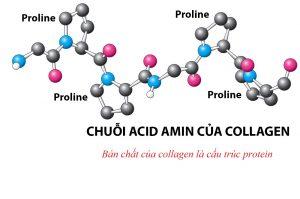 collagen-la-gi